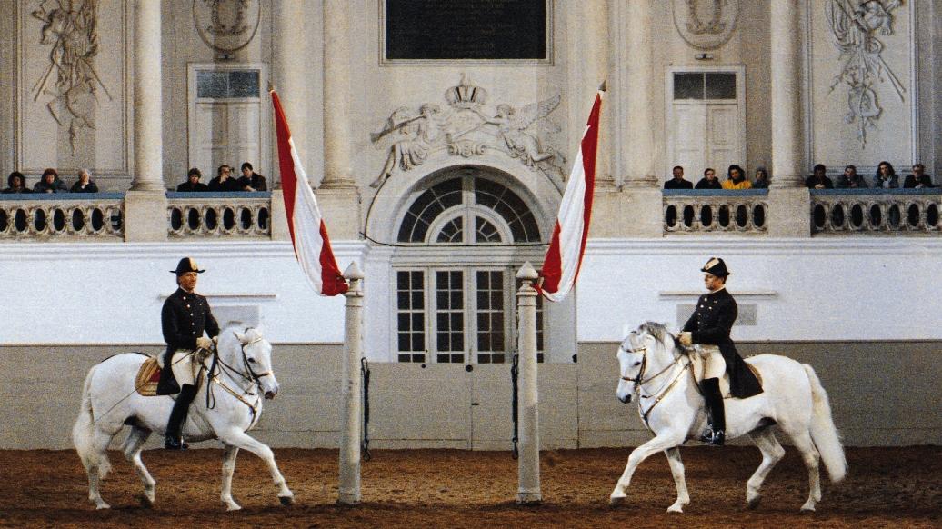 """Spanische Reitschule 1, Josefsplatz 1 Kaiser Karl VI. ließ 1729-1735 von Joseph Emanuel Fischer von Erlach die barocke Winterreitschule erbauen. Der das ganze Gebäude ausfüllende Reitschulsaal (55 m lang, 18 m breit, 17 m hoch) bot insbesondere während des Wiener Kongresses 1814/15 Raum für Festlichkeiten mit bis zu 10.000 Gästen. Nach wie vor finden hier die Vorführungen der 1572 gegründeten Spanischen Reitschule statt, eine ganz besondere Wiener Sehenswürdigkeit. Die Bezeichnung """"Spanische"""" kommt von der aus Spanien stammenden Pferderasse, die in Österreich seit 1562 zur Zucht herangezogen worden waren. Später wurden die spanischen Pferde nach dem 1580 gegründeten Gestüt Lipizza bei Triest (heute Lipica in Slowenien) Lipizzaner genannt. Jetzt werden sie in Piber in der Steiermark gezüchtet. Die Reitschule pflegt die Reitkunst in ihrer höchsten Vollendung, fördert durch die Ausbildung geeigneter Schüler die Dressurreiterei und ist eine der weltbekannten touristischen Attraktionen Wiens. Die """"Morgenarbeit"""", das Training der Lipizzaner, ist ohne Kartenreservierung zugänglich."""